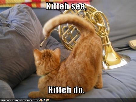 Kitteh see,  Kitteh do.