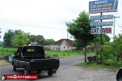 cat,oven,sign,wtf