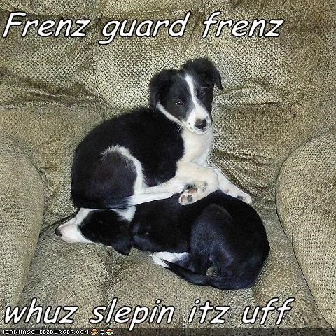 Frenz guard frenz  whuz slepin itz uff