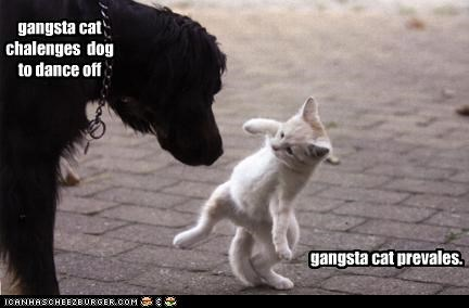 gangsta cat chalenges  dog  to dance off