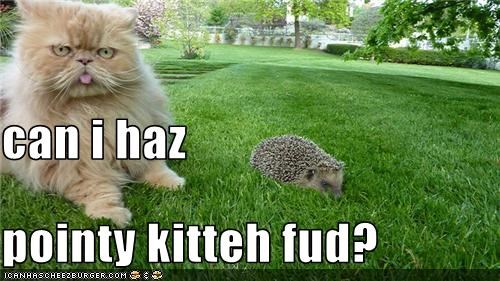 can i haz pointy kitteh fud?