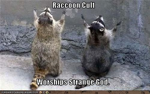 Raccoon Cult  Worships Strange God.