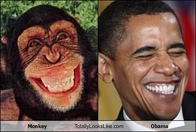 http://www.presstv.ir/detail/2014/03/25/356035/trained-ape-could-do-better-than-obama/