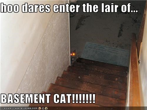 hoo dares enter the lair of...  BASEMENT CAT!!!!!!!