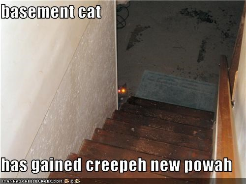 basement cat  has gained creepeh new powah