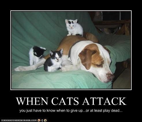 WHEN CATS ATTACK