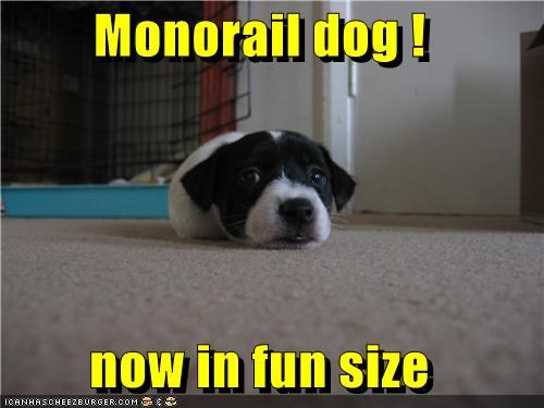 Monorail dog !  now in fun size