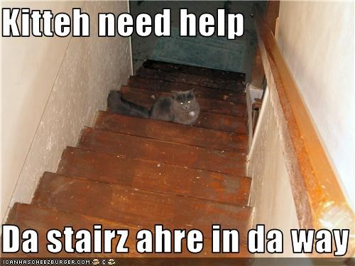 Kitteh need help  Da stairz ahre in da way