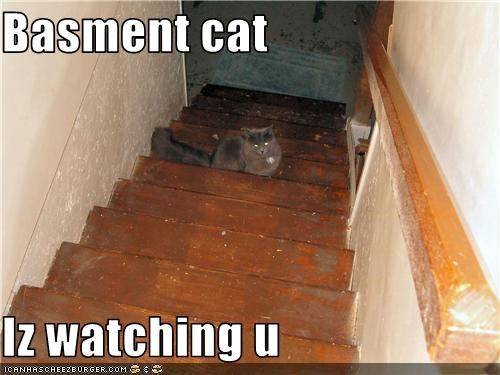Basment cat  Iz watching u