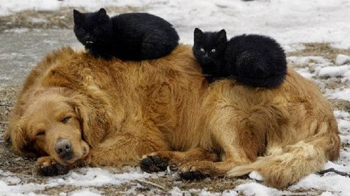 Time for a Cat Nap... On the Dog