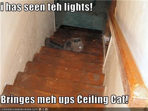 i has seen teh lights!  Bringes meh ups Ceiling Cat!