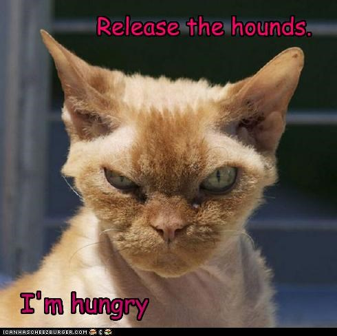 Release the hounds.