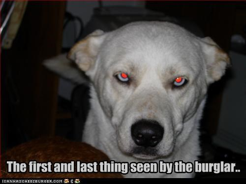 The first and last thing seen by the burglar..