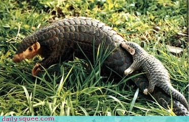 Yo Pangolin, There is a Small You on Your Back!