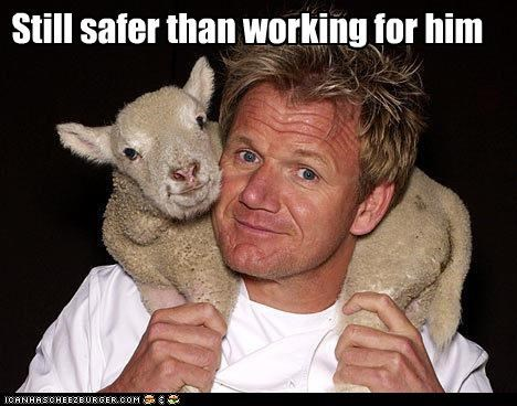anger,animals,celebrity chefs,food,gordon ramsay,lamb,work