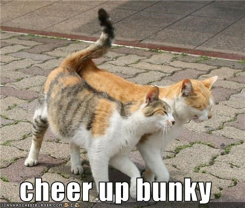 cheer up bunky