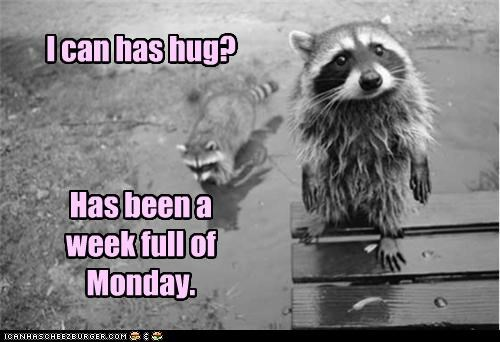 I can has hug?    Has been a week full of Monday.