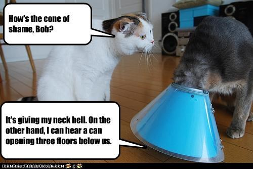 How's the cone of shame, Bob?