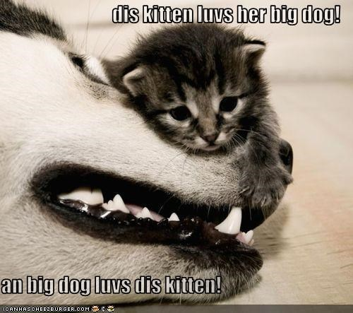 dis kitten luvs her big dog!  an big dog luvs dis kitten!
