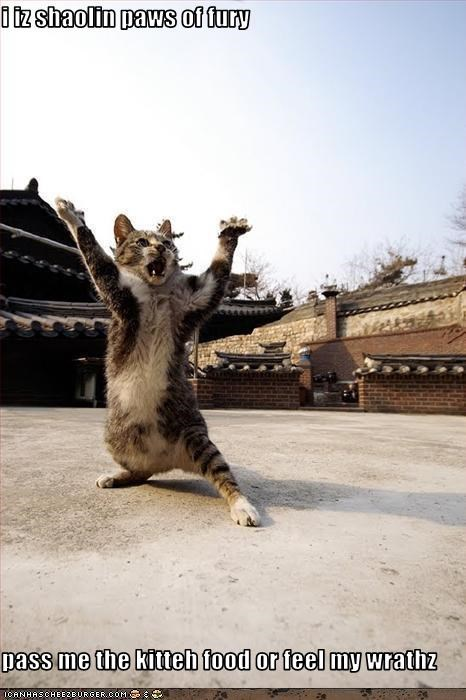 i iz shaolin paws of fury  pass me the kitteh food or feel my wrathz