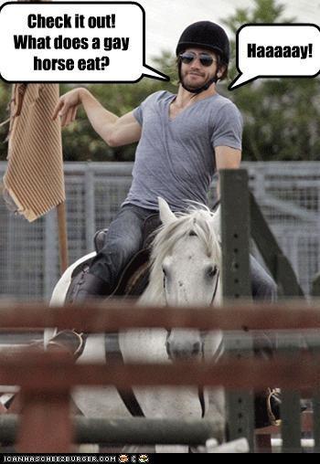 actor,gay,horse,jake gyllenhaal,jokes