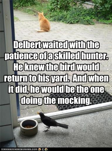 Delbert waited with the patience of a skilled hunter.  He knew the bird would return to his yard.  And when it did, he would be the one doing the mocking.