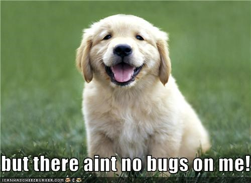 but there aint no bugs on me!