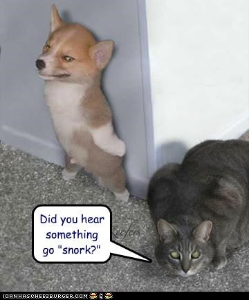 "Did you hear something go ""snork?"""