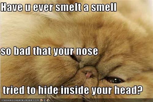 Have u ever smelt a smell so bad that your nose  tried to hide inside your head?