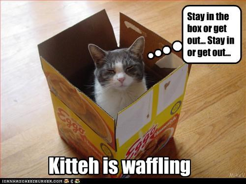 Kitteh is waffling