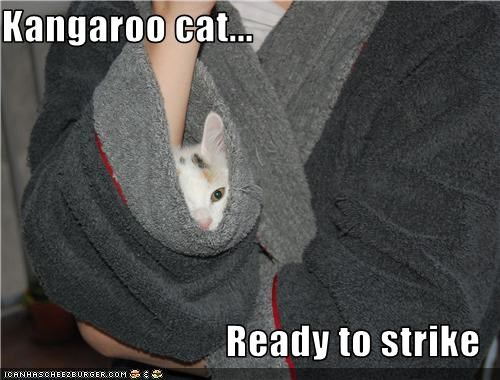 Kangaroo cat...  Ready to strike