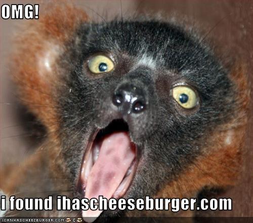 OMG!  i found ihascheeseburger.com