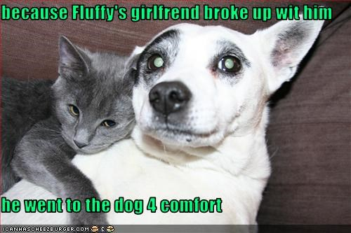 because Fluffy's girlfrend broke up wit him  he went to the dog 4 comfort