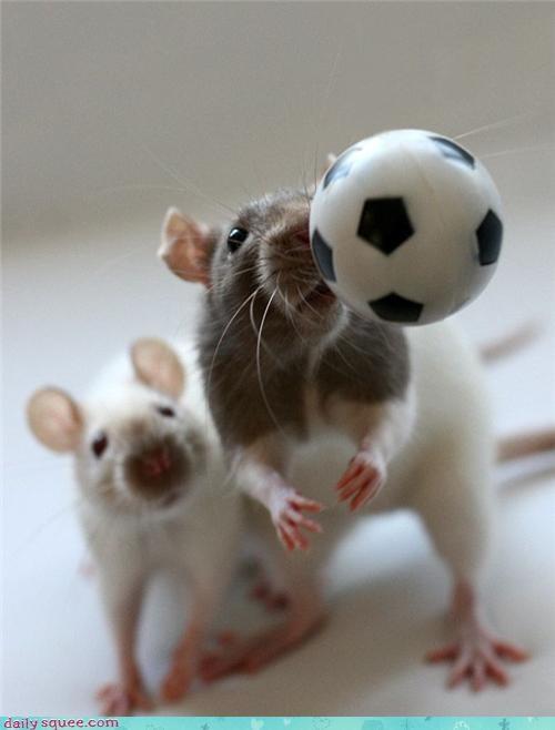 props,rat,squee spree