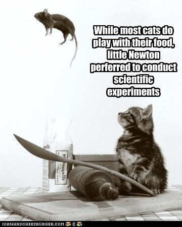 While most cats do play with their food, little Newton perferred to conduct  scientific experiments