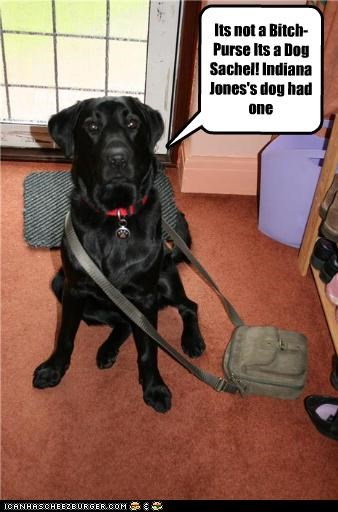 Its not a Dog-purse It's a sachel! Indiana Jones had one!