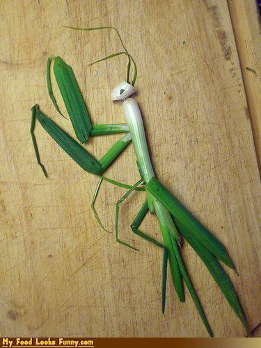 animals,fruits-veggies,insects,mantis,onions,praying mantis,scallion,skills