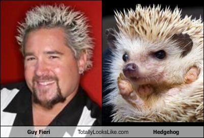 Guy Fieri Totally Looks Like Hedgehog