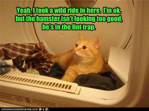 Yeah, I took a wild ride in here.  I'm ok, but the hamster isn't looking too good, he's in the lint trap.