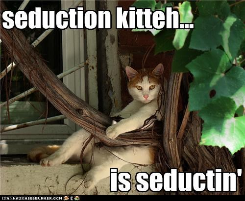 seduction kitteh...
