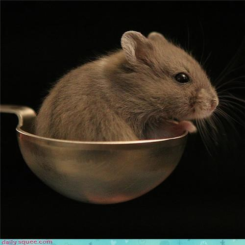 Just One Teaspoon of Mouse Left