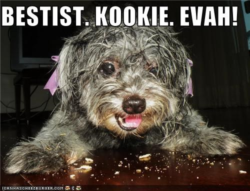 adorable,best,cookies,eat,hair,Hall of Fame,happy,mixed breed,nom