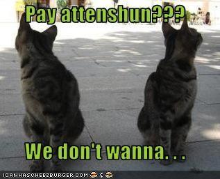 Pay attenshun???  We don't wanna. . .