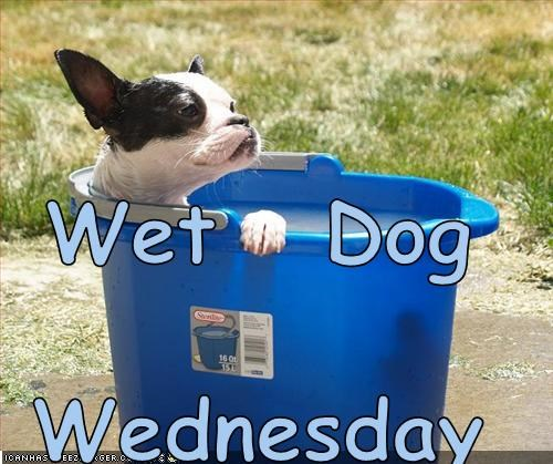 Wet   Dog Wednesday
