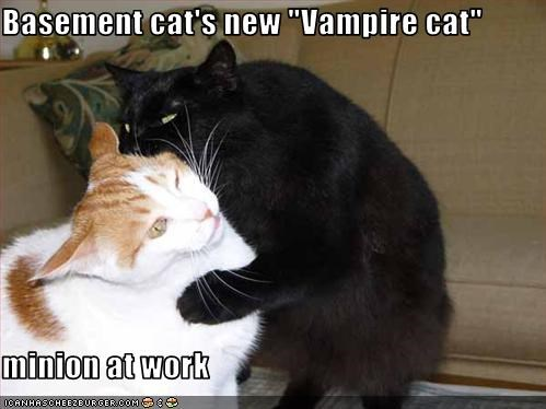 "Basement cat's new ""Vampire cat""  minion at work"