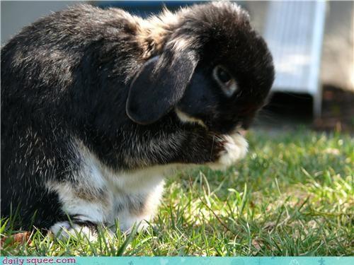 bunny,burp,cute