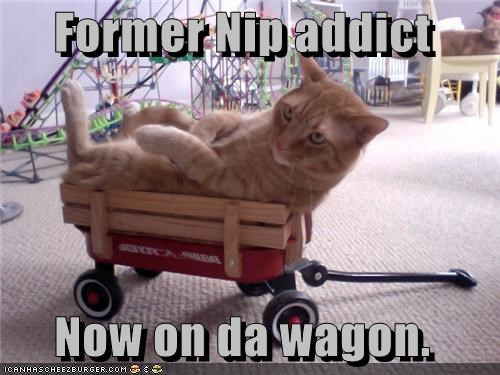 Former Nip addict   Now on da wagon.