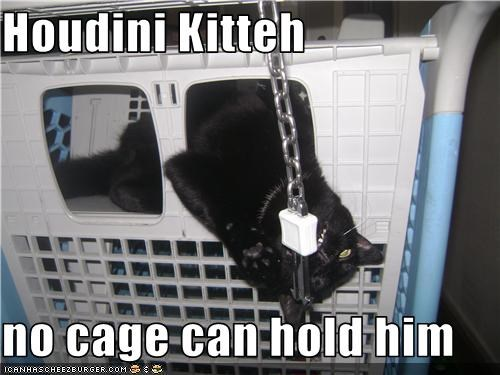 Houdini Kitteh  no cage can hold him