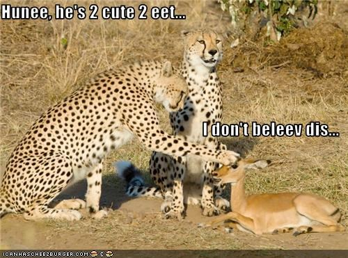 caption,cheetah,gazelle,noms,scared,too cute to eat