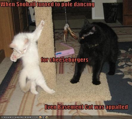 When Snoball turned to pole dancing  for cheeseburgers Even Basement Cat was appalled